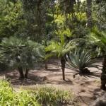 Ogrody wMarrakeszu
