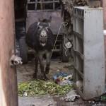 Crazy Donkey :)