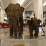 Lotnisko wDelhi