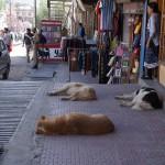 Ulice Leh - Agencja Yak Travel