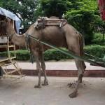 Agra wejście doTaj Mahal