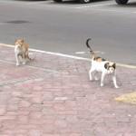 Koty zAbu Dhabi :)