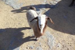 Oman - Jabal Shams 2015