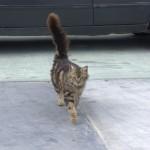 Portowy kot