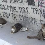 Koty portowe