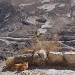Widok zzamku ash-Shaobak