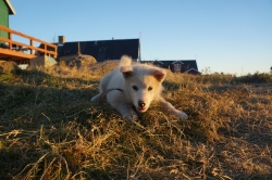 Grenlandia - Arctic Circle Trail 2016