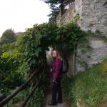 Tunel z winorośli