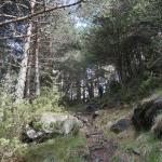 Cami de Percanela