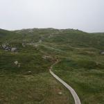w drodze na Fløyen