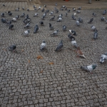 Cemiterio doPrado doRepouso