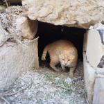 Kot przewodnik