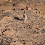 Ruiny domu Lawrenca zArabii