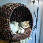 Kocia Kawiarnia – Mačkafé