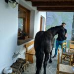 oraz koniś
