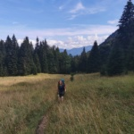 Planina Spodnja Grintovnica